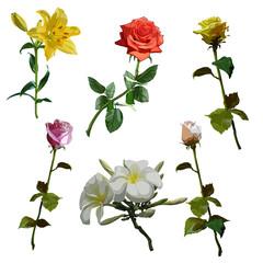 flowers set, rose, lily, magnolia
