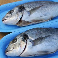 due orate_ pesce