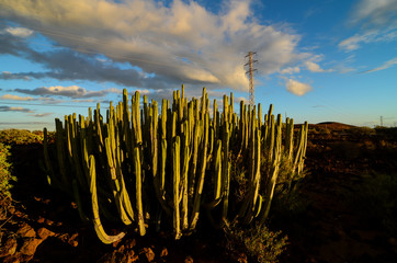 Calm Cactus Desert Sunset