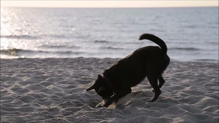 Hund Strand Meer