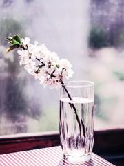 Цветок в стакане