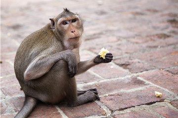 monkey sitting on the brick block floor