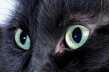 Black cat eyes. Macro shooting