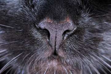 Black cat nose. Macro shooting