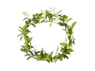 wreath of creeper flower