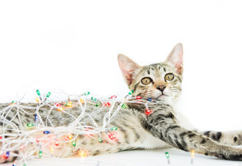 A cat bind wire lights for christmas