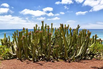 Cactus at seashore