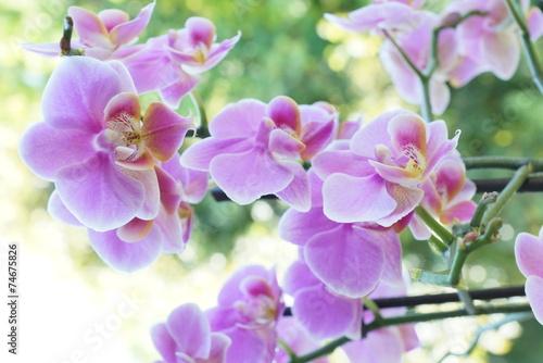 canvas print picture Pinke Orchidee mit grünem Hintergrund