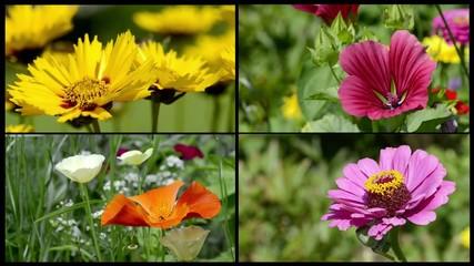 Sommerblumen collage