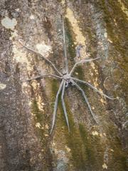 Huge Spider On Rock
