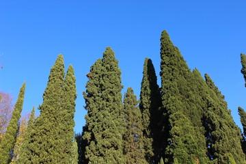 Nature vegetation