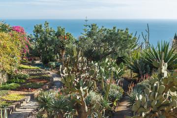 Botanical garden. Funchal, Madeira island, Portugal