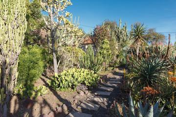 Cactuies. Botanical garden. Funchal, Madeira island, Portugal