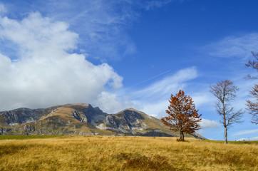 Late autumn mountaim meadow