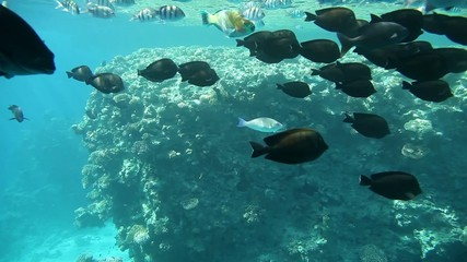 Underwater footage of sea life in tropical waters of Egypt