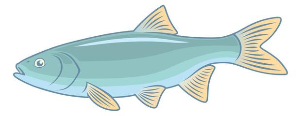 fish ide