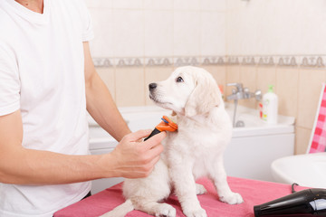 man grooming of his dog at home