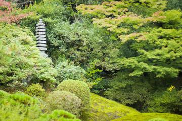 Japanese autumn forest
