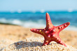 canvas print picture - Red starfish at the beach