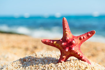 Red starfish at the beach
