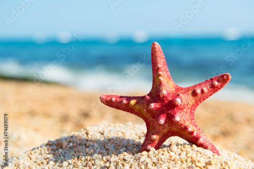 canvas print picture Red starfish at the beach