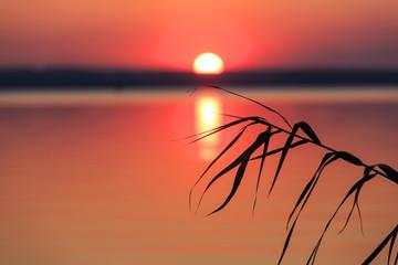 Cane on sunset over lake