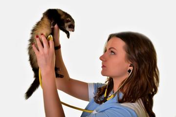 ferret an veterinarian