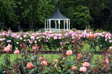 The Rose Garden of Palmerston North NZL