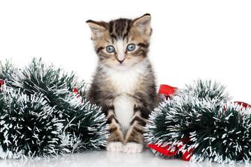 Kitten Christmas garland
