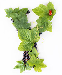 letter B made with black and red currants and green leaves