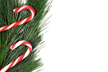 christmas fir tree and candy cane on white background