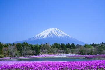 Phlox and Mt.Fuji