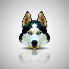 Siberian Husky vector polygon geometric