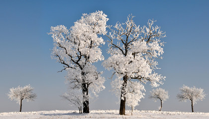 Beautiful winter landscape with trees