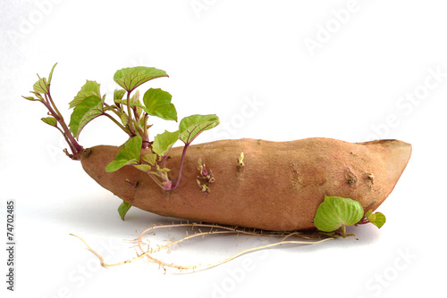 root and spread sweet potato isolated on white background.