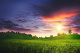 Dramatic sunset on the summer meadow, natural landscape poster