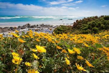 Flowers season in Cape Town