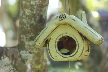 Bird house in the nature