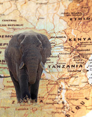 Elephant overlying a vintage map of Tanzania