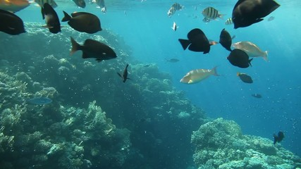 Diverse corals and fish in the Red Sea. Egypt