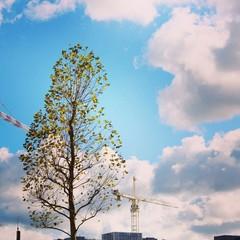 Crane tree blue sky background