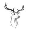 Deer head on white background - 74714892