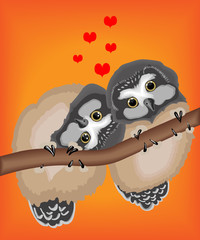 Two cute owls in love on a branch