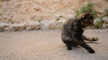 Black and brown wild cat in the street