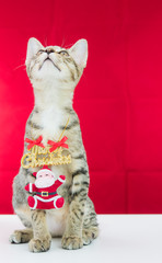 A cat bind wire santa claus for christmas