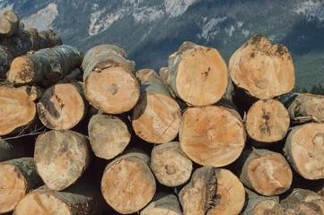Sammelplatz für Bäume