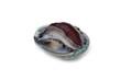 Fresh raw abalone
