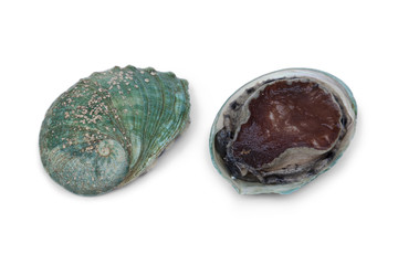 Front and back of a fresh raw abalone