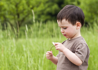 Toddler child at summer meadow holding a daisy.