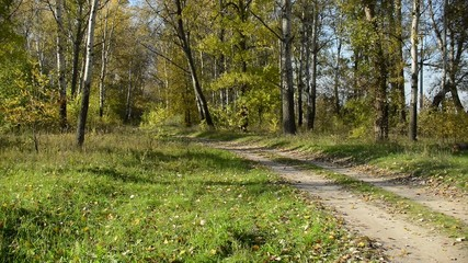 Road panorama in the forest